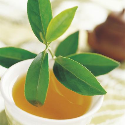 茶葉網-線上買茶的第一品牌