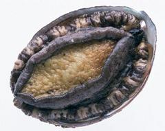 挪威海藻粉貝類用(貝類用海藻粉)干貝-鮑魚-蜆-蛤