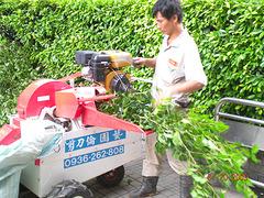 專業鋸樹--剪刀倫園藝社
